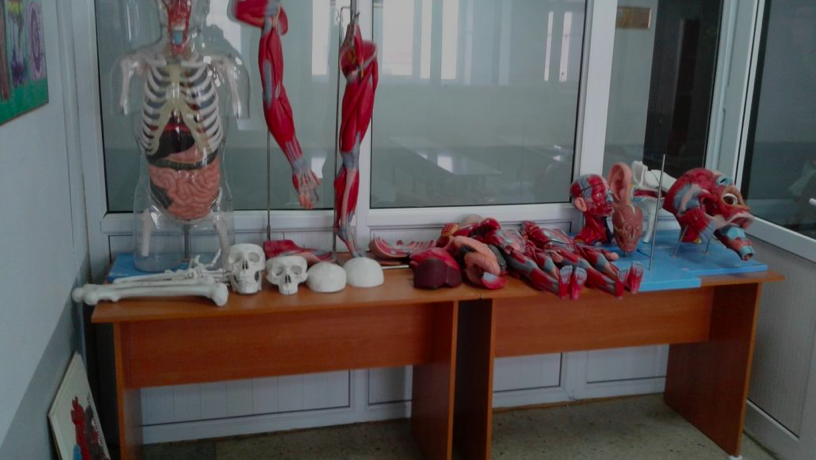 """Educational and laboratory complex """"ANATOMICUM"""" supplemented with new morphological preparations"""