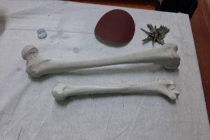 JPG-20200217105415-anatomy